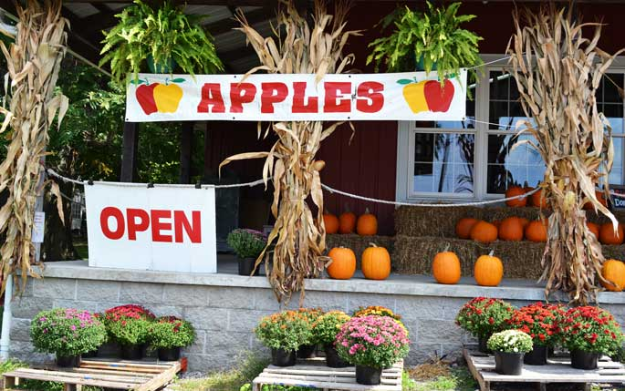 apple-trees-and-pumpkins-a